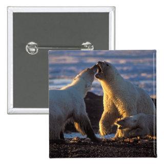 Polar bear sows with cub at side, 1002 coastal pinback button