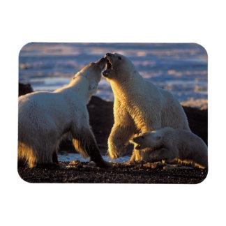 Polar bear sows with cub at side, 1002 coastal rectangular photo magnet