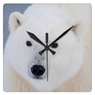 Polar Bear Square Wall Clock