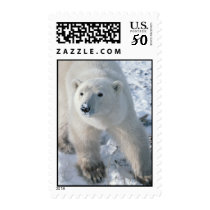 Polar Bear Stamp