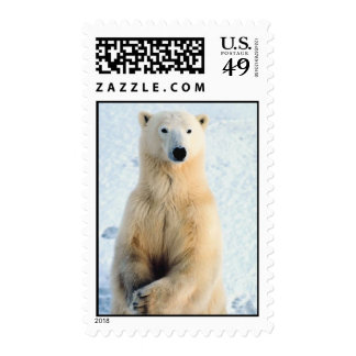 Polar Bear Standing Postage Stamps