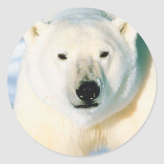 Polar Bear Sticker