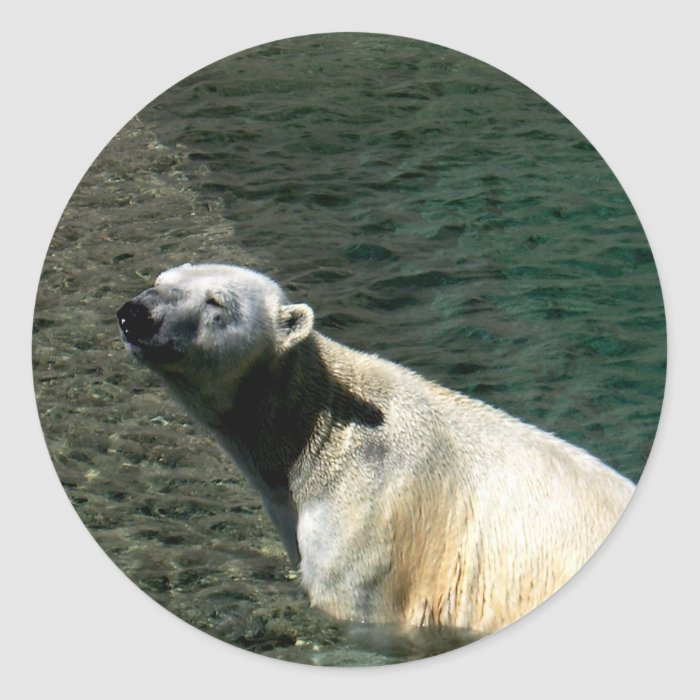 Polar Bear Sticker_Polar Swim Classic Round Sticker