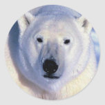 Polar Bear Stickers
