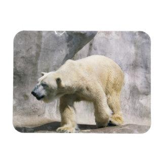 Polar Bear Strut Flexible Magnet Rectangle Magnets