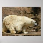 Polar Bear Strut Print