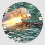 Polar Bear Swim Round Stickers