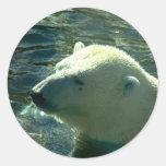 Polar Bear Swim Stickers