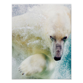 Polar Bear Swimming In Blue Water, Photography Poster
