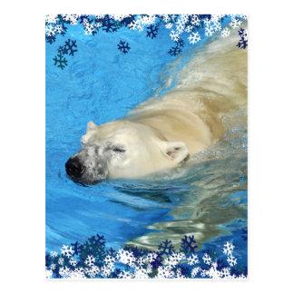 Polar bear swimming post cards