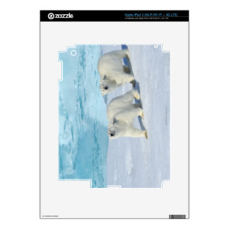 Polar bear, two cups on pack ice, Ursus Decals For iPad 3