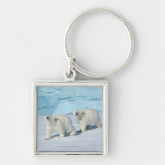 Polar bear, two cups on pack ice, Ursus Keychain