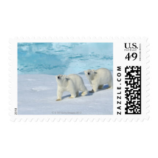 Polar bear, two cups on pack ice, Ursus Postage Stamp