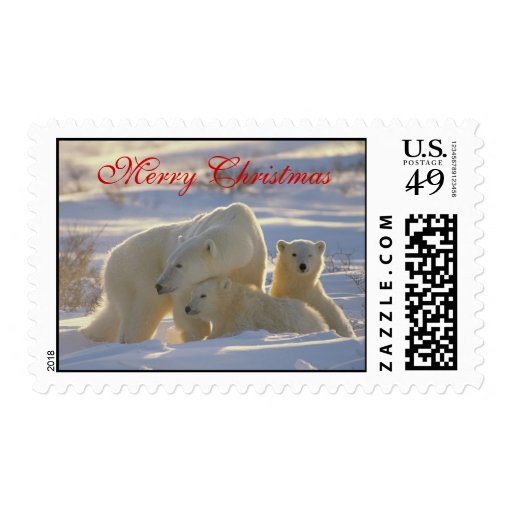 Polar bear & two cute baby cubs in snow christmas postage