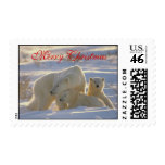 Polar bear & two cute baby cubs in snow christmas postage stamp