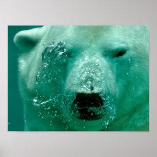 Polar Bear Under Water Poster