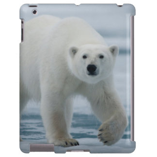 Polar Bear, Ursus Maritimus, Adult