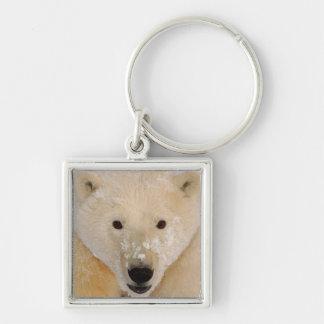 polar bear, Ursus maritimus, close up of a cub Keychain