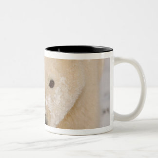 polar bear, Ursus maritimus, close up of a cub Two-Tone Coffee Mug