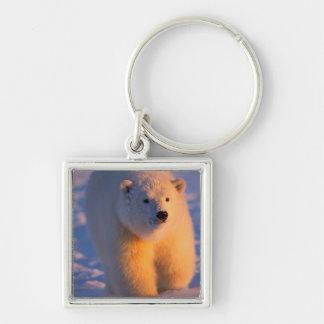 polar bear, Ursus maritimus, cub on the pack Keychain