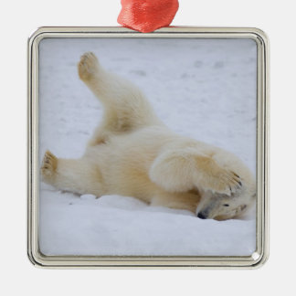 polar bear, Ursus maritimus, cub rolling 2 Square Metal Christmas Ornament