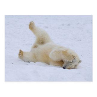 polar bear, Ursus maritimus, cub rolling 2 Postcards