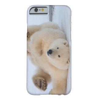 polar bear, Ursus maritimus, cub rolling 3 Barely There iPhone 6 Case