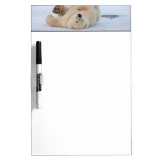polar bear, Ursus maritimus, cub rolling 3 Dry-Erase Board