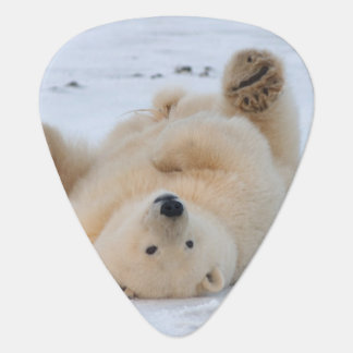 polar bear, Ursus maritimus, cub rolling 3 Guitar Pick