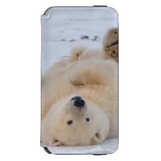 polar bear, Ursus maritimus, cub rolling 3 iPhone 6/6s Wallet Case