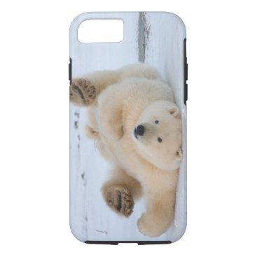 USA Themed polar bear, Ursus maritimus, cub rolling 3 iPhone 8/7 Case