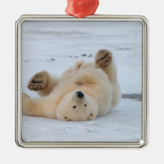 polar bear, Ursus maritimus, cub rolling 3 Metal Ornament