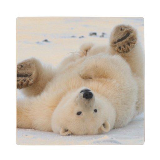 polar bear, Ursus maritimus, cub rolling 3 Maple Wood Coaster