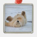 polar bear, Ursus maritimus, cub rolling 3 Square Metal Christmas Ornament