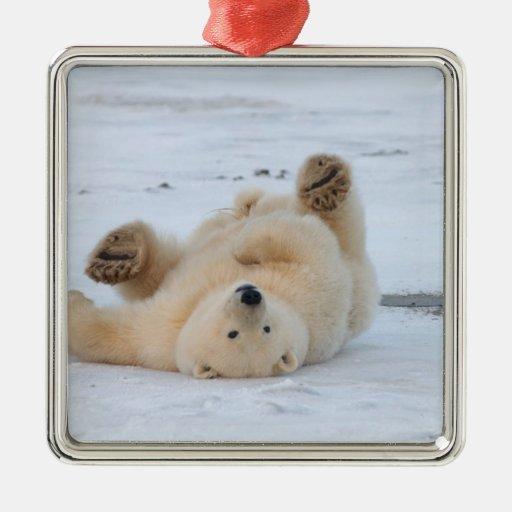 polar bear, Ursus maritimus, cub rolling 3 Christmas Ornament