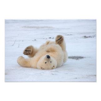 polar bear, Ursus maritimus, cub rolling 3 Photo Print