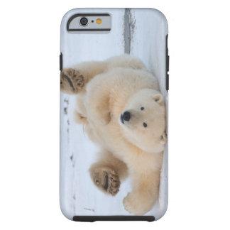 polar bear, Ursus maritimus, cub rolling 3 Tough iPhone 6 Case