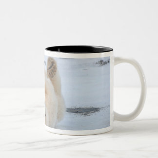 polar bear, Ursus maritimus, cub rolling 3 Two-Tone Coffee Mug
