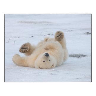 polar bear, Ursus maritimus, cub rolling 3