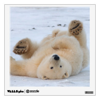 polar bear, Ursus maritimus, cub rolling 3 Wall Sticker
