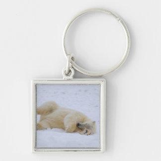 polar bear, Ursus maritimus, cub rolling Keychain