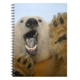 polar bear, Ursus maritimus, curiously looks in 2 Notebook