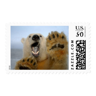 polar bear, Ursus maritimus, curiously looks in 2 Postage