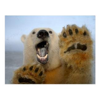 polar bear, Ursus maritimus, curiously looks in 2 Postcard