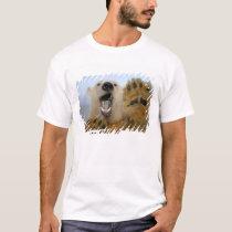 polar bear, Ursus maritimus, curiously looks in 2 T-Shirt