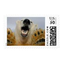 polar bear, Ursus maritimus, curiously looks in Postage