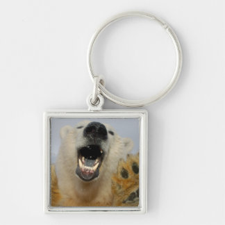 polar bear, Ursus maritimus, curiously looks in Silver-Colored Square Keychain