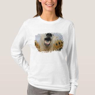 polar bear, Ursus maritimus, curiously looks in T-Shirt