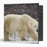 Polar Bear Ursus maritimus) in Churchill Vinyl Binder