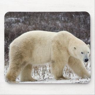 Polar Bear Ursus maritimus) in Churchill Mousepads